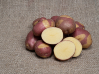 Kartoffel Celebration