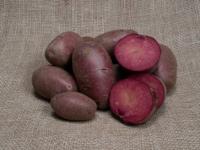 Kartoffel Lily rose