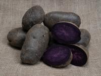 Kartoffel Purple Rain