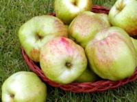 Gul Gråsten æble