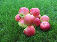 Sunrice æble
