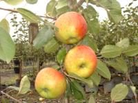 Topaz æble