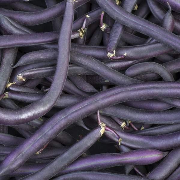 Purple buskbønne