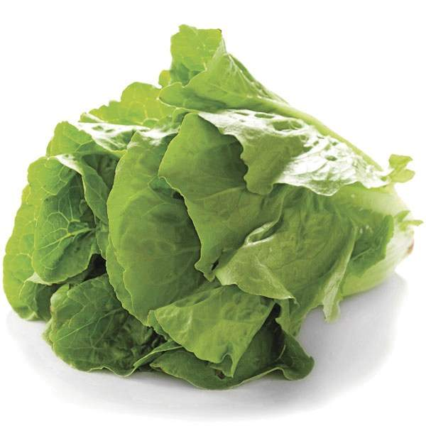 Romaine salat